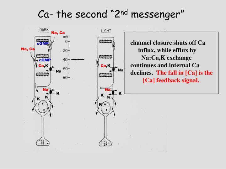 """Ca- the second """"2"""