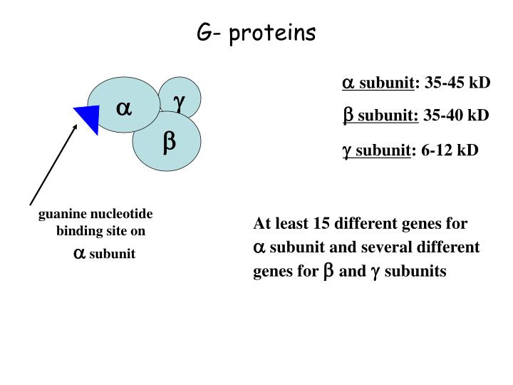 G- proteins