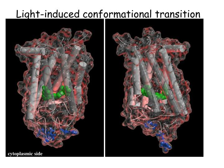 Light-induced conformational transition