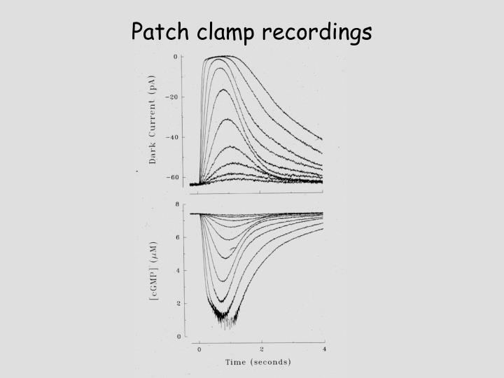 Patch clamp recordings