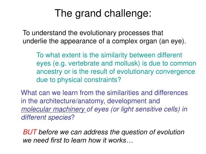 The grand challenge: