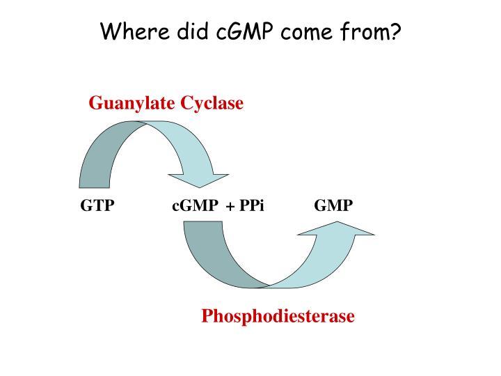 Where did cGMP come from?