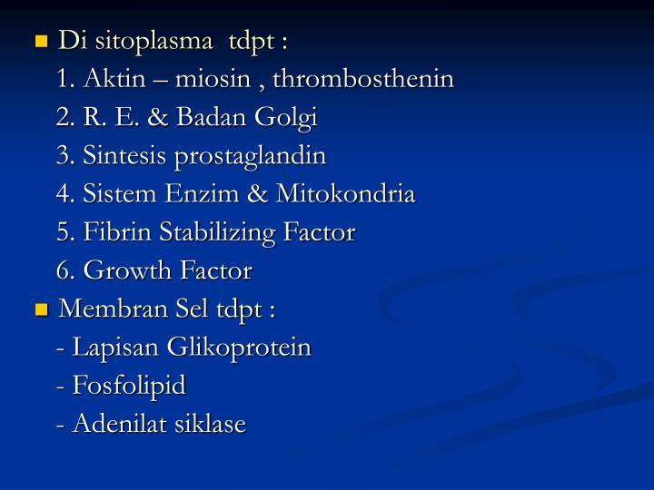 Di sitoplasma  tdpt :