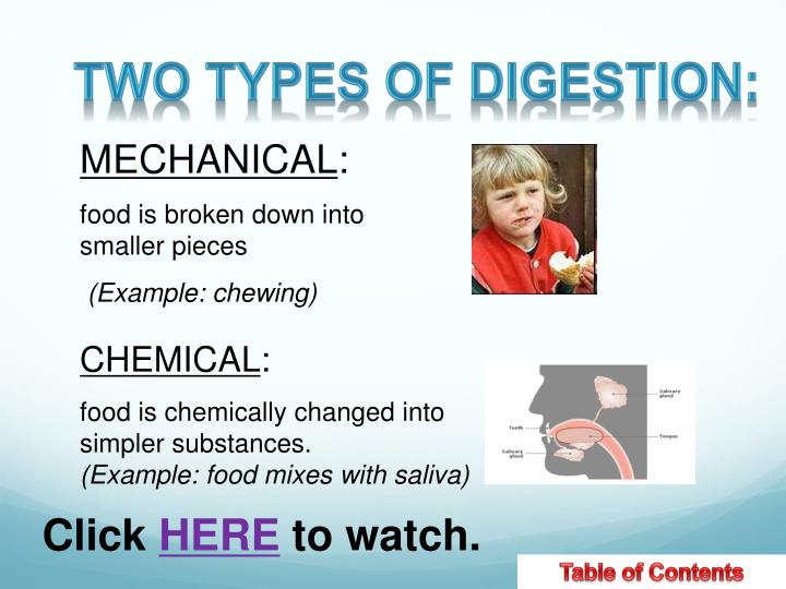 Two types of Digestion:
