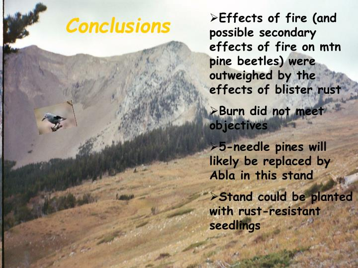 Effects of fire (and possible secondary effects of fire on mtn pine beetles) were outweighed by the effects of blister rust