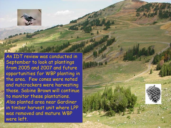 An IDT review was conducted in September to look at plantings from 2005 and 2007 and future opportunities for WBP planting in the area.  Few cones were noted and nutcrackers were harvesting those. Sabine Brown will continue to monitor these plantations. Also planted area near Gardiner in timber harvest unit where LPP was removed and mature WBP were left.
