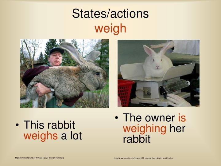 This rabbit