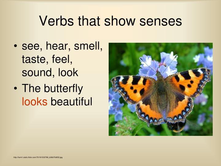 see, hear, smell, taste, feel, sound, look