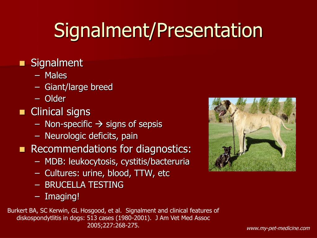 PPT - Diskospondylitis ( spondylitis and vertebral ...