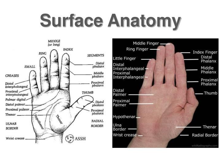 Ppt Wrist Hand Powerpoint Presentation Id4595290