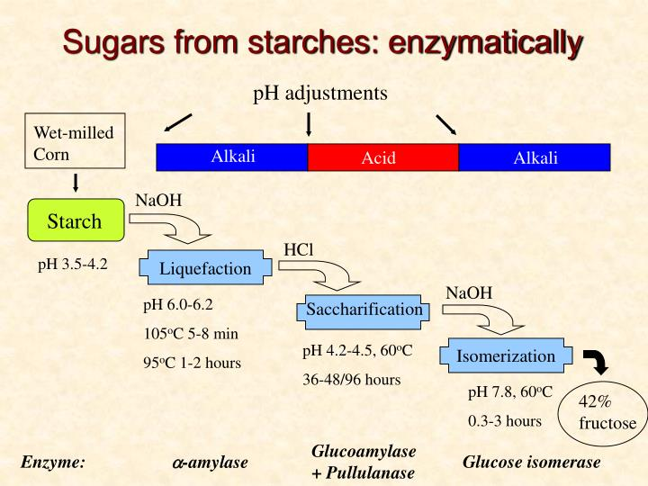 Sugars from starches: enzymatically