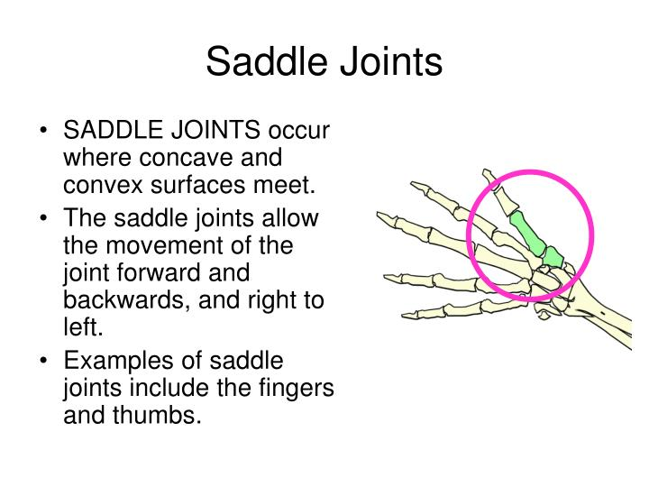 Ppt The Skeleton The Types Of Joints And Movement Powerpoint