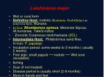 leishmania major
