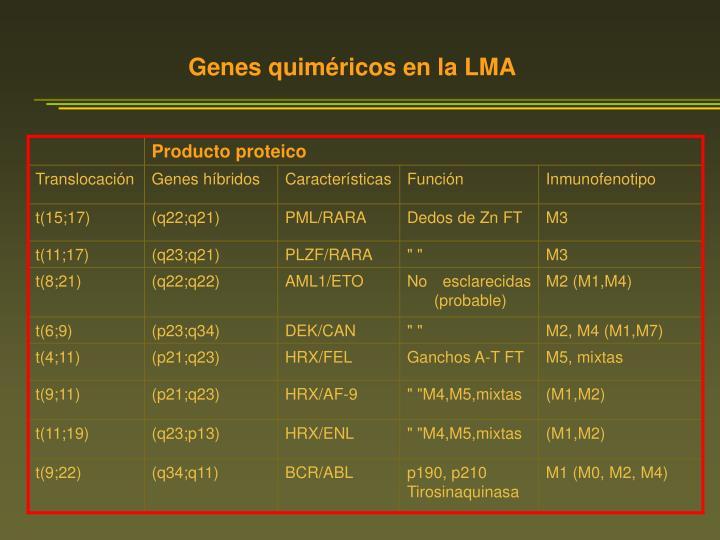 Genes quiméricos en la LMA