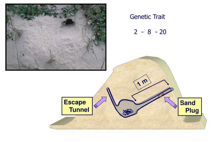 Genetic Trait