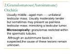 2 granulomatous autoimmune orchitis