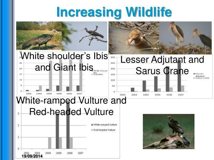 Increasing Wildlife