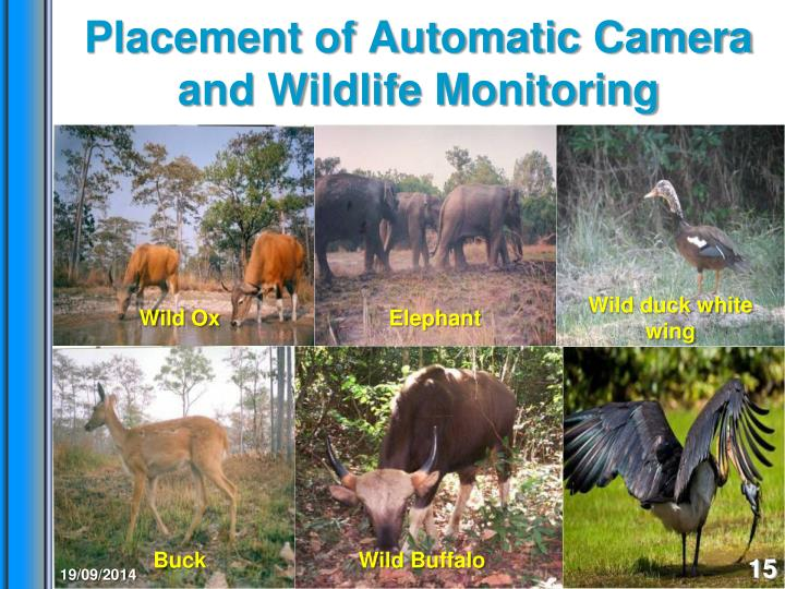 Placement of Automatic Camera and Wildlife Monitoring