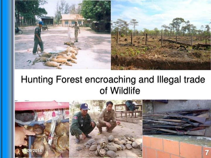 Hunting Forest encroaching and Illegal trade of Wildlife
