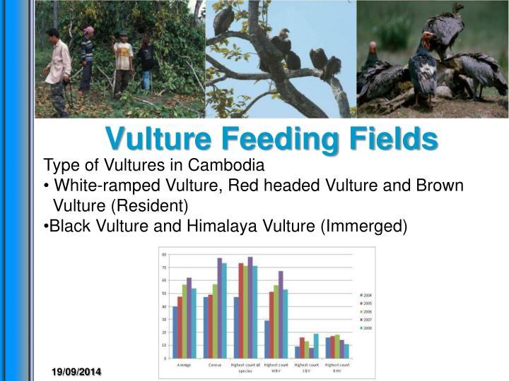Vulture Feeding Fields