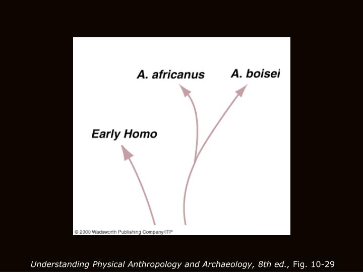 Understanding Physical Anthropology and Archaeology, 8th ed.,