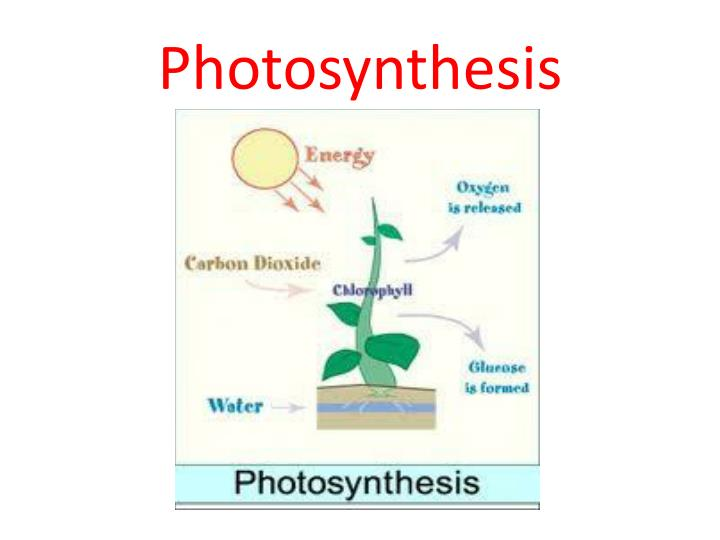Ppt - Cell Processes Powerpoint Presentation