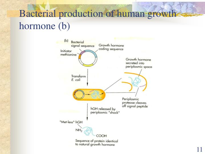 Bacterial production of human growth hormone (b)