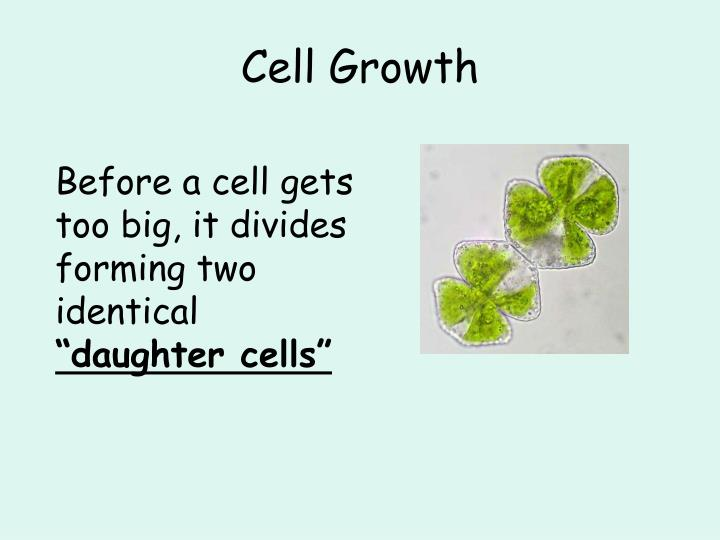 Cell growth1