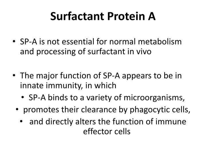 Surfactant Protein A
