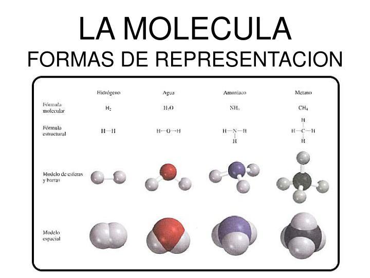 LA MOLECULA