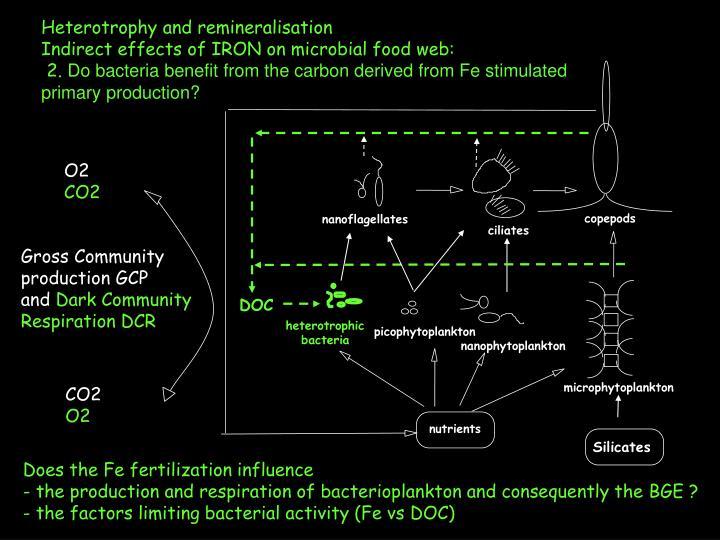Heterotrophy and remineralisation