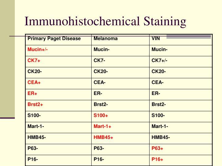 Immunohistochemical Staining