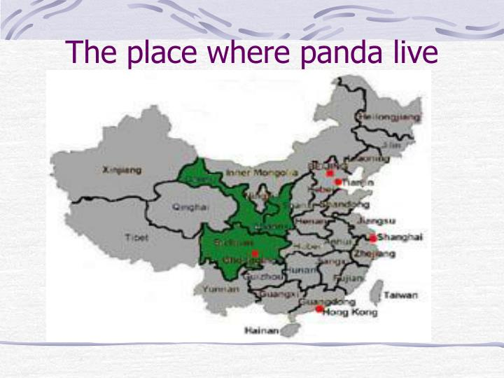 The place where panda live