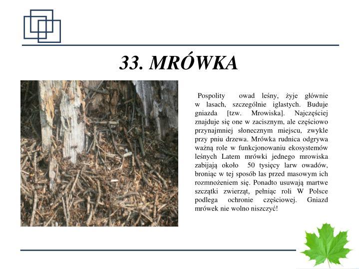33. MRÓWKA