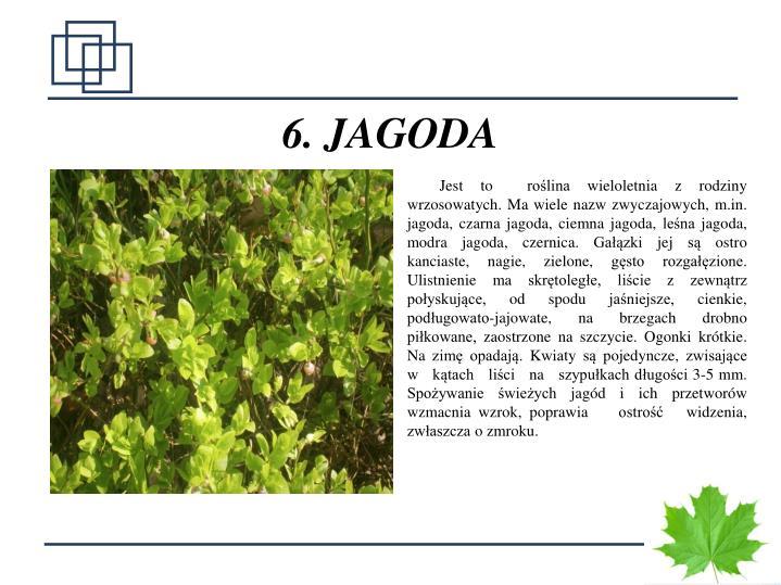 6. JAGODA