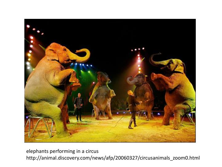 elephants performing in a circus