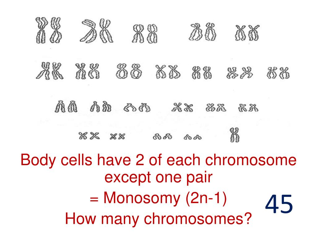 how many chromosomes does a normal human sex cell have in Walsall