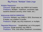 big picture multiple data lingo