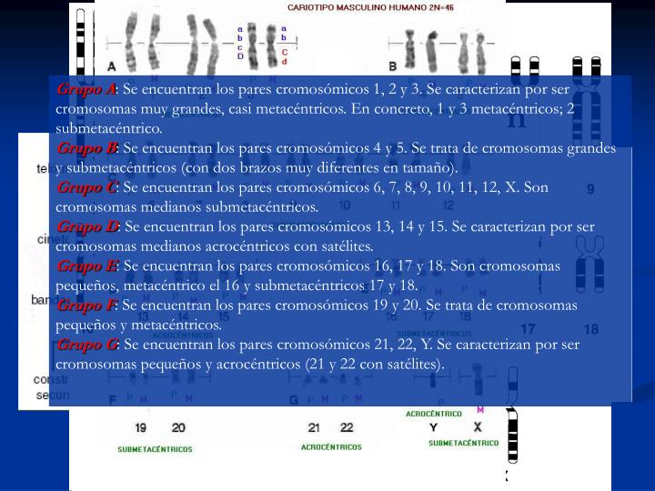 Estructura y composici n de los cromosomas