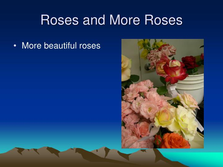 Roses and More Roses