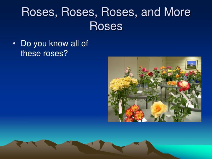 Roses, Roses, Roses, and More Roses