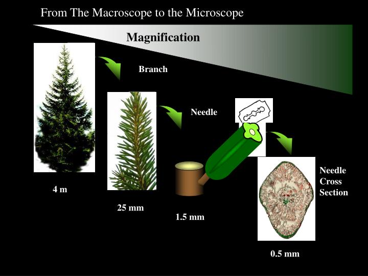 From The Macroscope to the Microscope