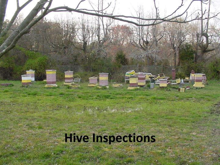 hive inspections n.
