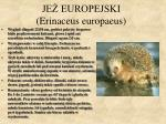 je europejski erinaceus europaeus