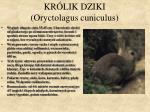 kr lik dziki oryctolagus cuniculus