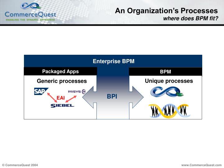 An Organization's Processes