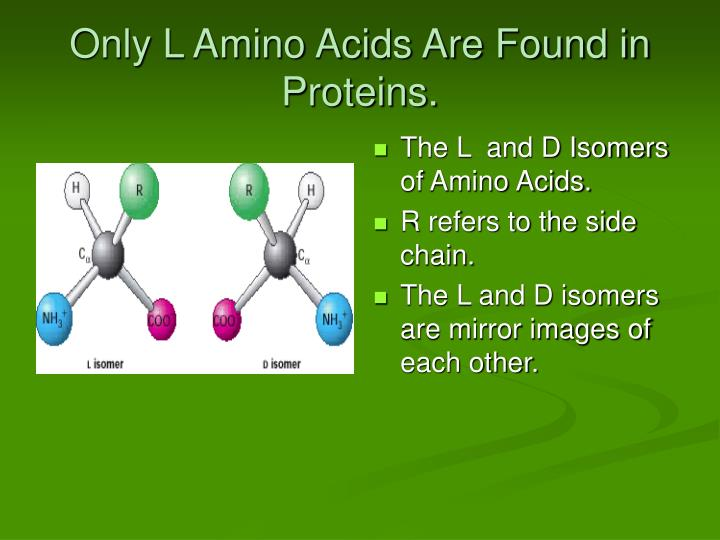 Only L Amino Acids Are Found in Proteins.