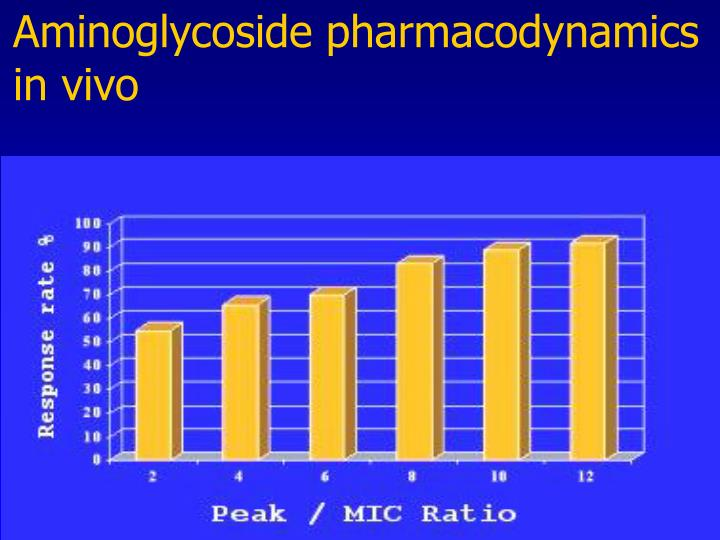 Aminoglycoside pharmacodynamics  in vivo