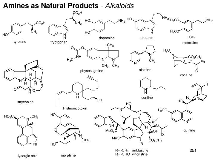 Amines as Natural Products