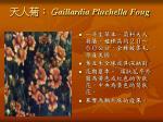 aillardia pluchella foug
